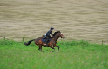 Berkshire Gallops